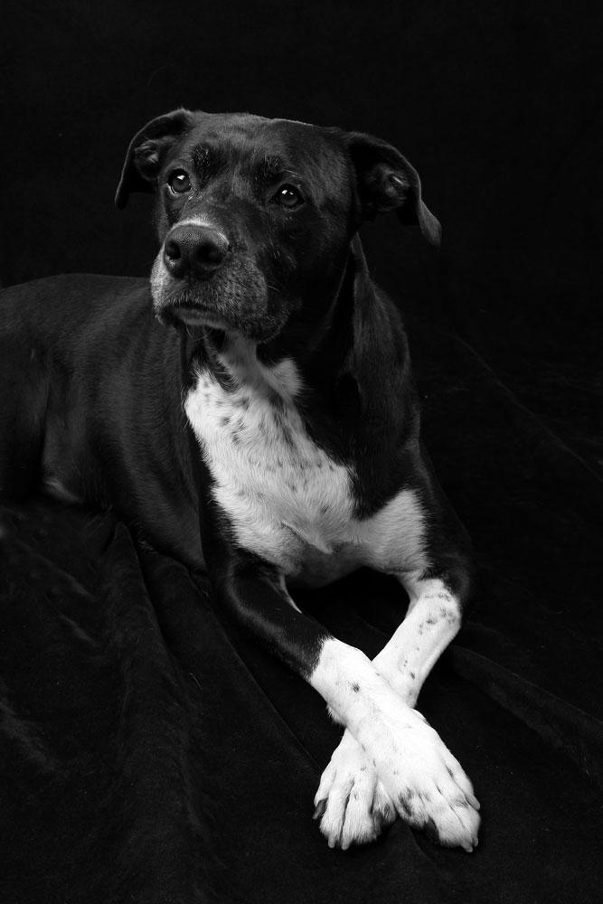 dog posing for photograph